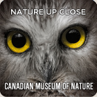 Visit the Extraordinary Arctic at the Canadian Museum of Nature